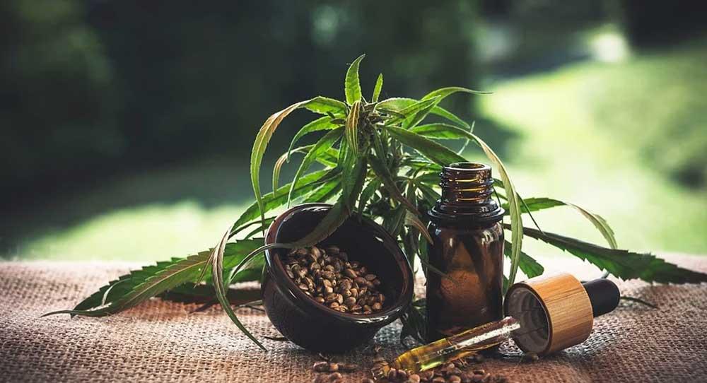 planta cannabis legal
